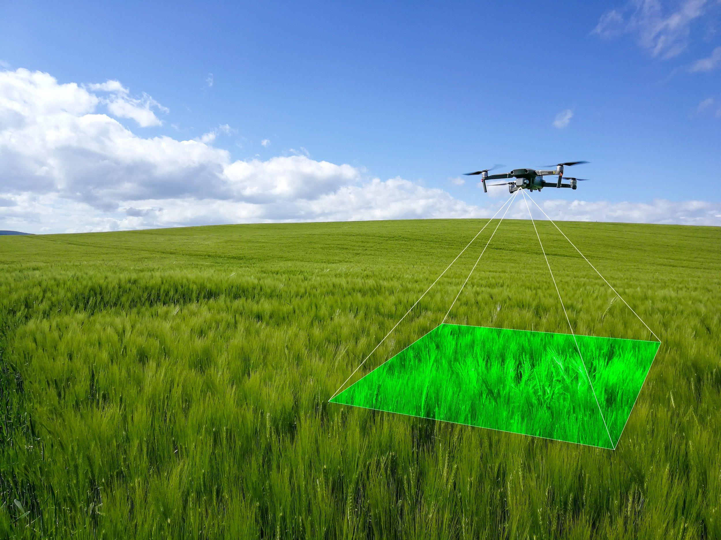 New drone technology revolutionises crop walking